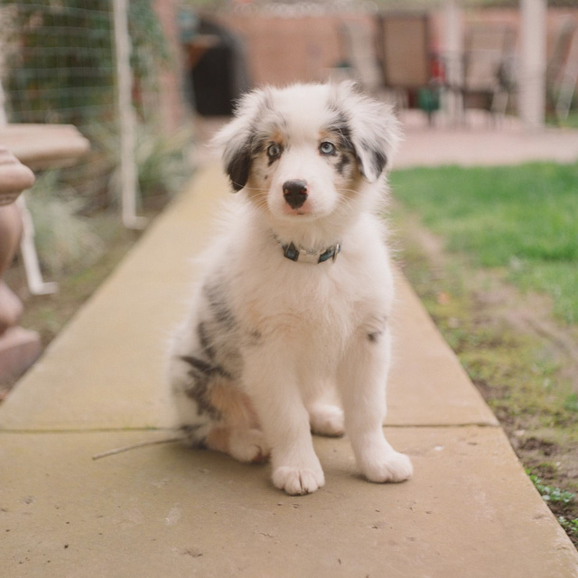Gratuitous cute-puppy photo. If you don't like puppies, you're a robot and I have charts and graphs below for you.