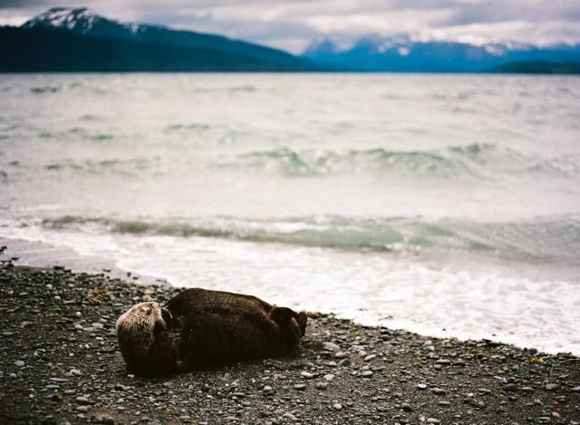 Alaskan otter.